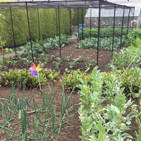 fruit vegetable cages