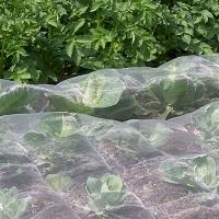 Mesh Netting For Vegetables